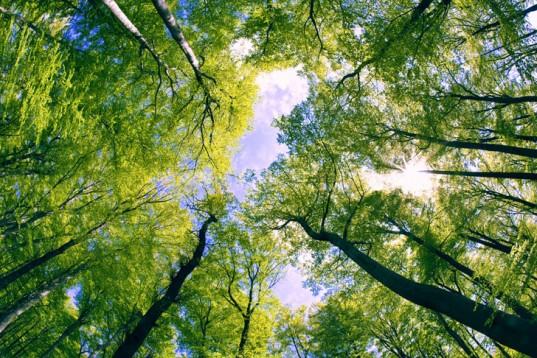 Проект «DIABOLO» – Розподілена, інтегрована і гармонізована інформація про лісові ресурси для здійснення прогнозування в Біоекономіці